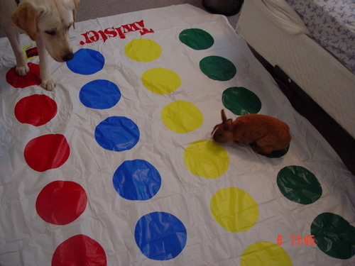 Izzy knows how to play twister,Tribble don't.