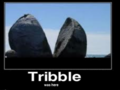 Tribble will do this to the world, if you tick her off!!! - tribble photo