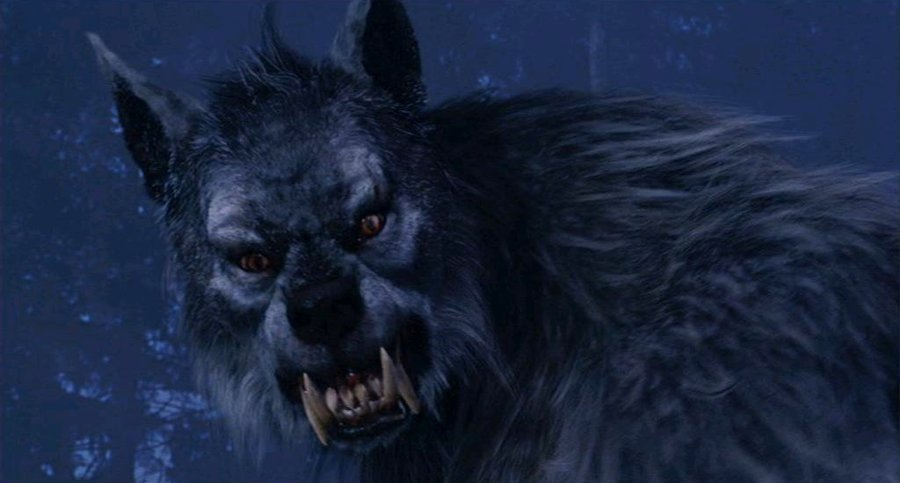 Werewolf images WereWolf HD wallpaper and background photos (20392065)