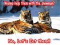 tiger funny - animal-humor photo