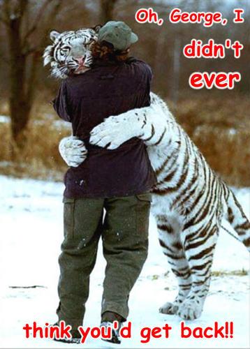 tiger funny