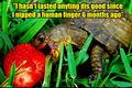 turtle funny
