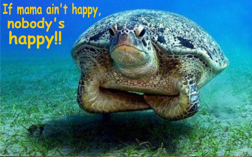turtle funny - animal-humor Photo