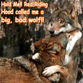 wolf funny - animal-humor photo
