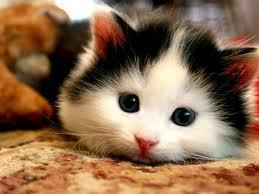 Gatti wallpaper titled Cutest cat in the world!