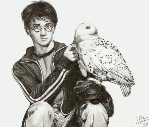 Percy Jackson vs Harry Potter Hintergrund containing a homing pigeon entitled Harry Potter