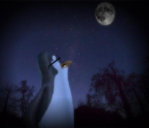 Highway penguin, auk