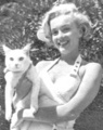 Marilyn with a cat