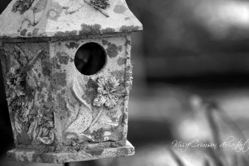 My photographie