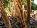 Pretty Plants - photography photo