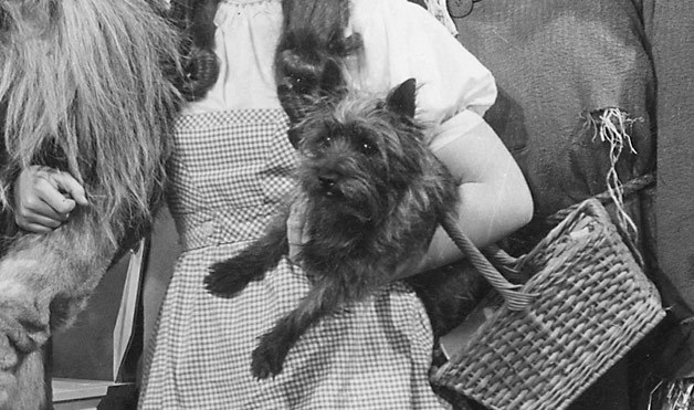 Toto In Dorothy's Arms