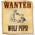 Wanted wolf pups! (bigger verson) - fire-and-ice-the-wolf-pack fan art