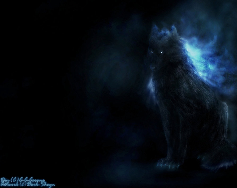 Black And Blue Wolf Wallpaper