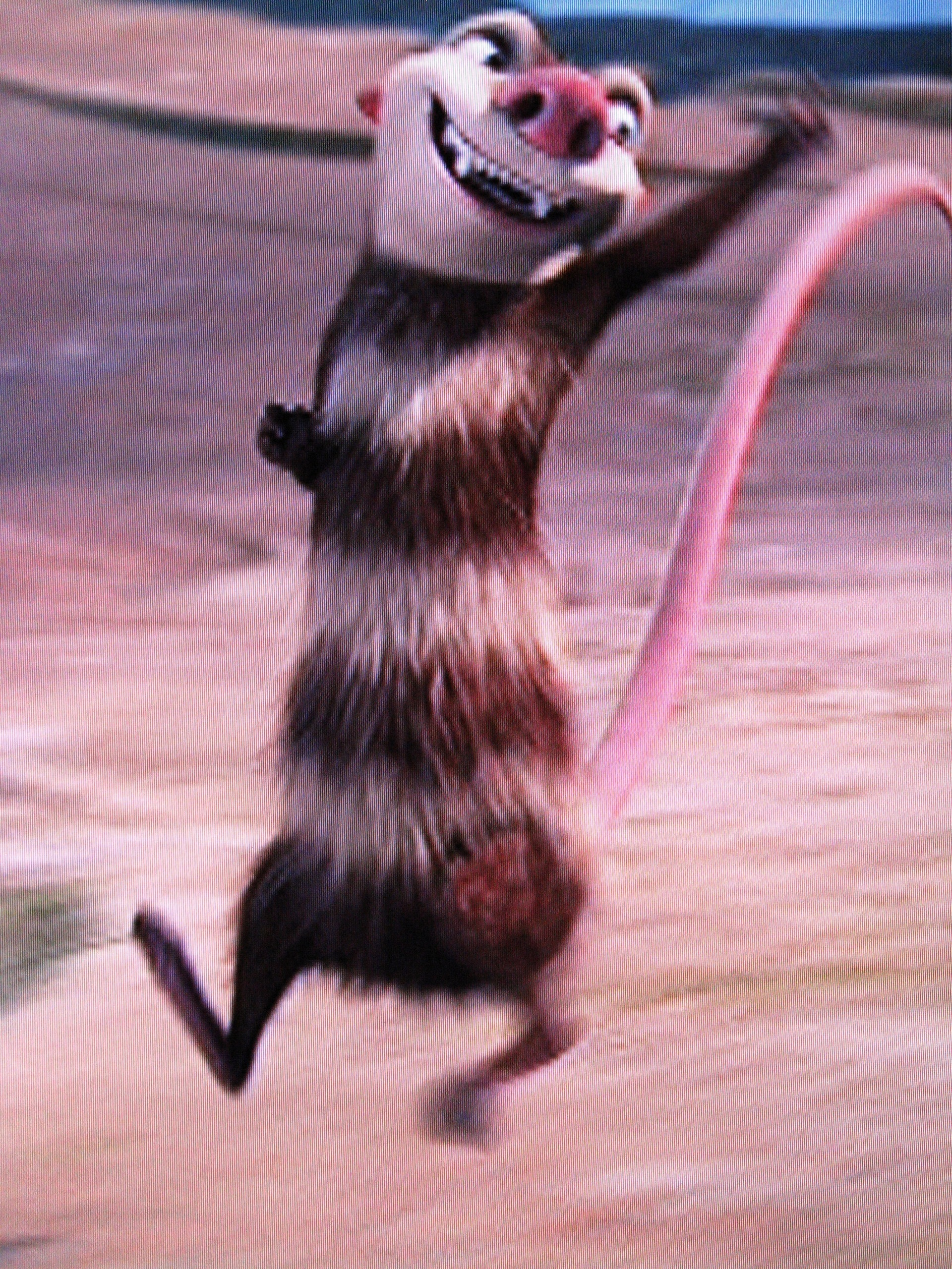 """Ice Age: Eddie images """"..Or pink, if it's a girl!"""" HD ..."""
