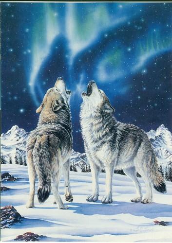 Aurora Borealis Wolves