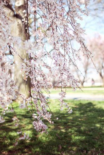 Beautiful Blumen ♥