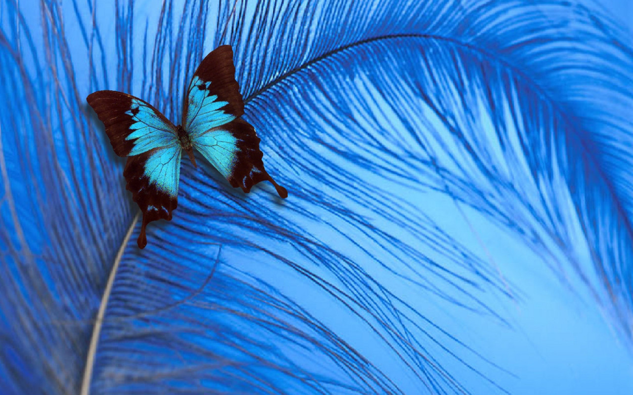 blue butterfly group - photo #23