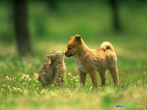 Cat and Dog <3
