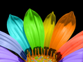 Colorful flower ♥ - bright-colors wallpaper