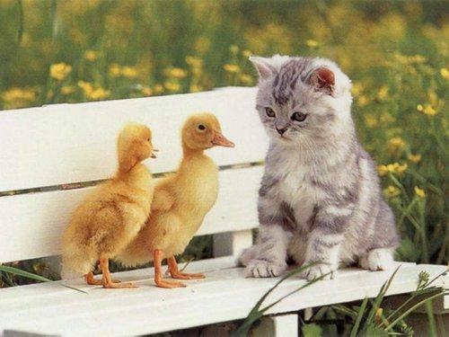 Cute cat ^-^