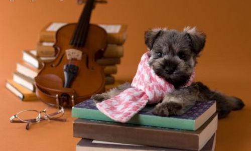 Doggy Teddy :)