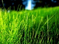 Green Grass :) - bright-colors wallpaper
