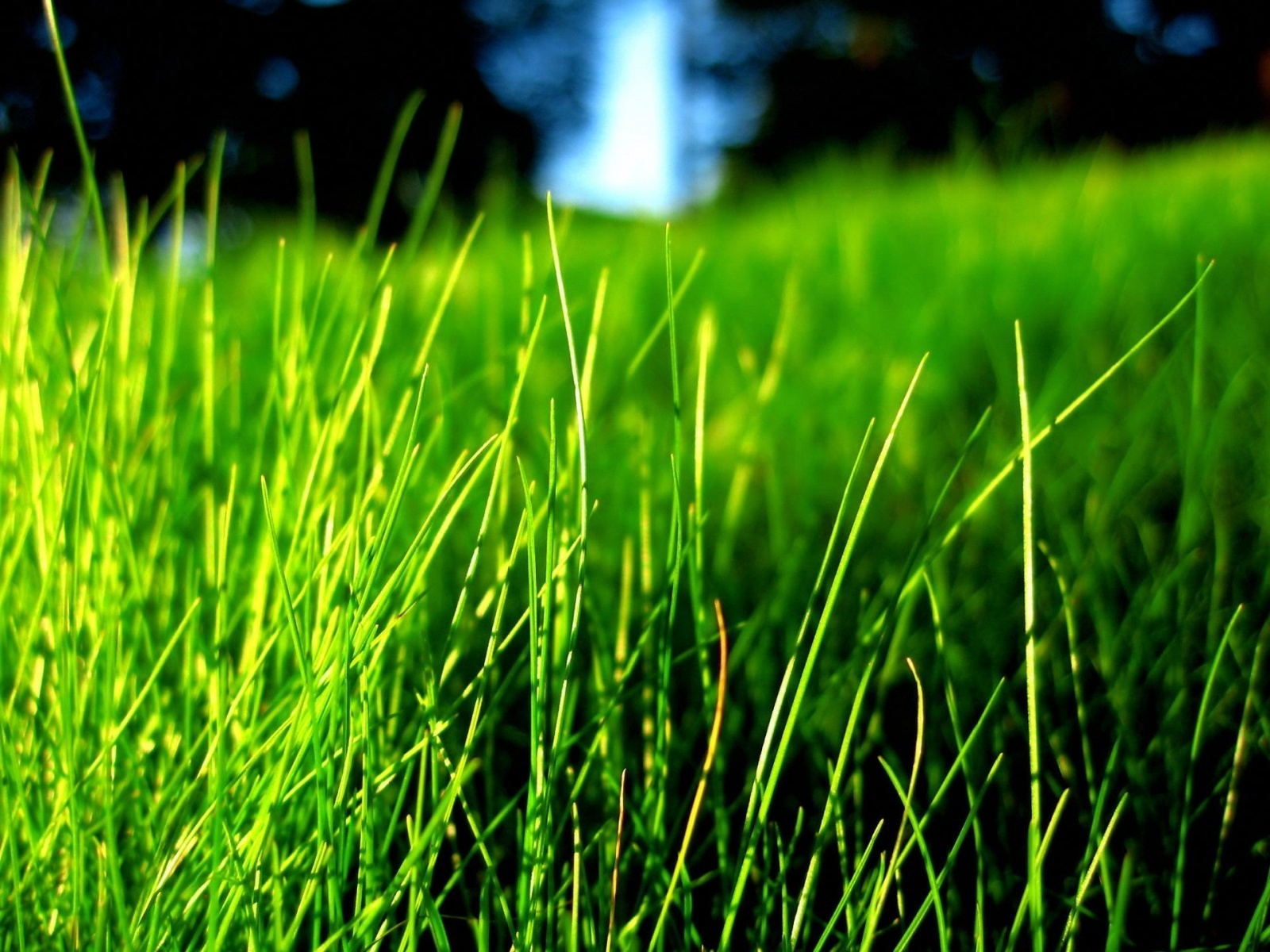 Bright colors images green grass wallpaper photos for Pretty grass