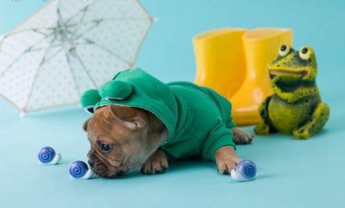 Little Frog Prince :)