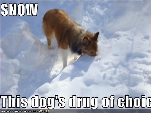 Animal Humor wallpaper called Snow