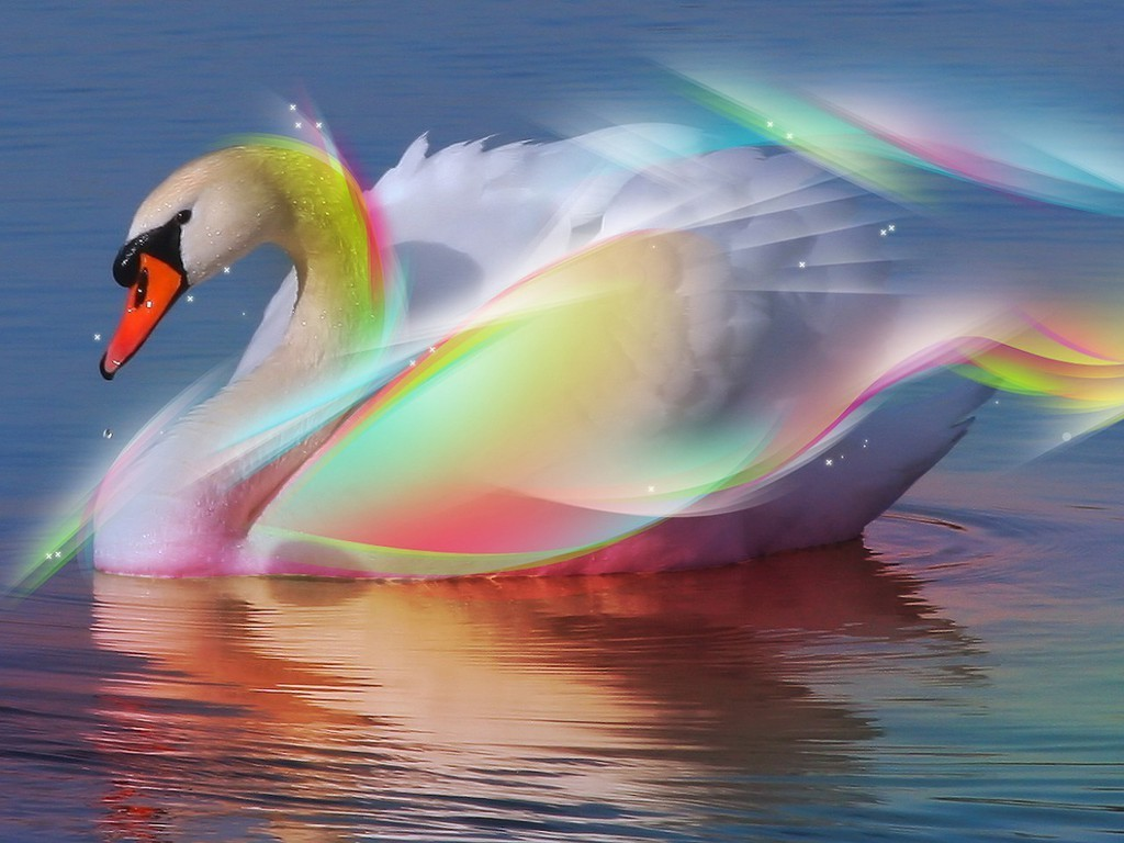 bright colors images swan ♥ hd wallpaper and background photos