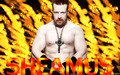 sheamus - sheamus wallpaper