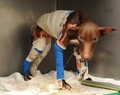 who would do something 2 this poor dog! - against-animal-cruelty photo