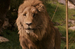 ASLAN THE LION - aslan icon
