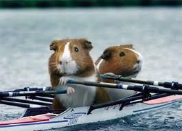 Guinea Pig Games
