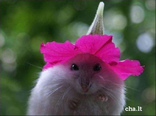 HamsTer<3