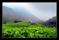 Munnar - kerala photo