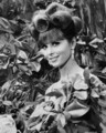 Tina Louise as Ginger Grant - gilligans-island photo