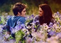 edward bella  - twilight-series photo