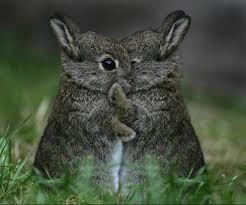 Huggles for you! <3