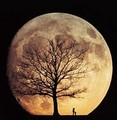 Moon Illusion - moon photo