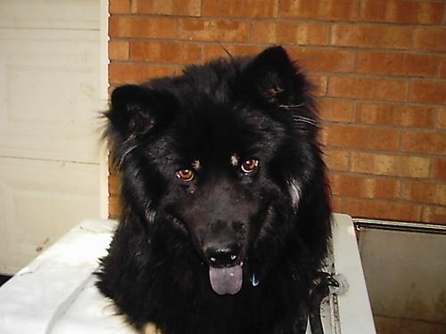 my dog delgado :3