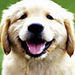 Happy Puppy - teddybear64 icon
