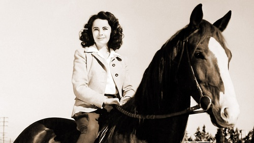 Elizabeth Taylor karatasi la kupamba ukuta with a horse trail, a horse wrangler, and a saddle horse entitled National Velvet