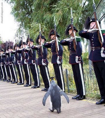 Skipper commands a whole battalion of soldiers in real life :D