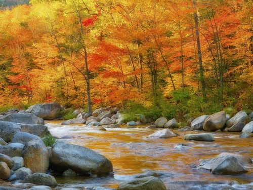 autumn in the woods - beautiful-pictures Photo