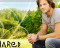 Jared - sam-winchester wallpaper