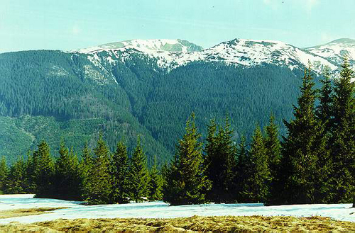 The Carpathian mountains