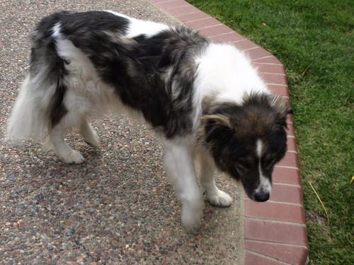 my dog that passed away