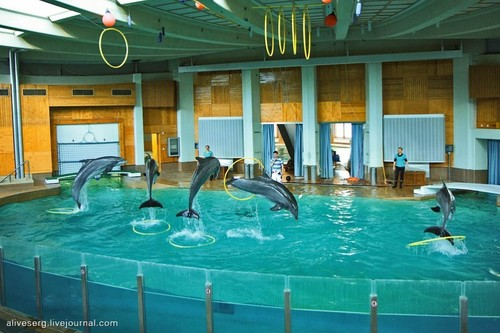 DolpHins <3