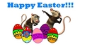Happy Easter with Crash and Eddie!!